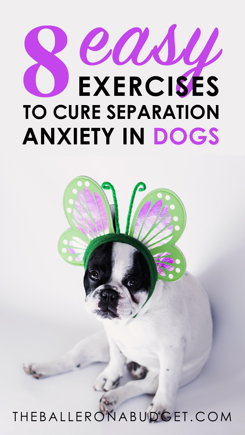 Does your pup ruin things when you're gone? Does he cry or make messes when he's alone? Learn these 8 easy ways to cure separation anxiety in dogs, all taught from professional dog trainers. - www.theballeronabudget.com
