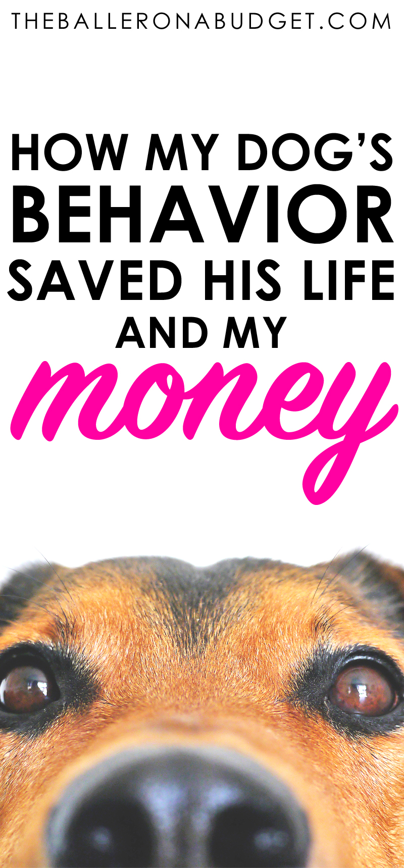 My pit bull Skooter almost died from blood loss, but not only did his behavior help us get him to the hospital - it helped us save a lot of money on his vet bill. Read more to see why having a well-mannered dog can save you money just like Skooter did. - www.theballeronabudget.com